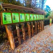 Small lesna sciezka edukacyjna dla dzieci katowice