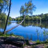Park miejski im. Jacka Kuronia w Sosnowcu