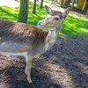 mini zoo park kuronia sosnowiec zdjęcie 1