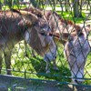 mini zoo park kuronia sosnowiec zdjęcie 3