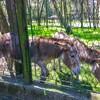 mini zoo park kuronia sosnowiec zdjęcie 4