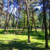 mini zoo park kuronia sosnowiec zdjęcie 0