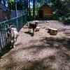 mini zoo park kuronia sosnowiec zdjęcie 12