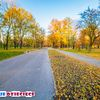 Park Sielecki Sosnowiec