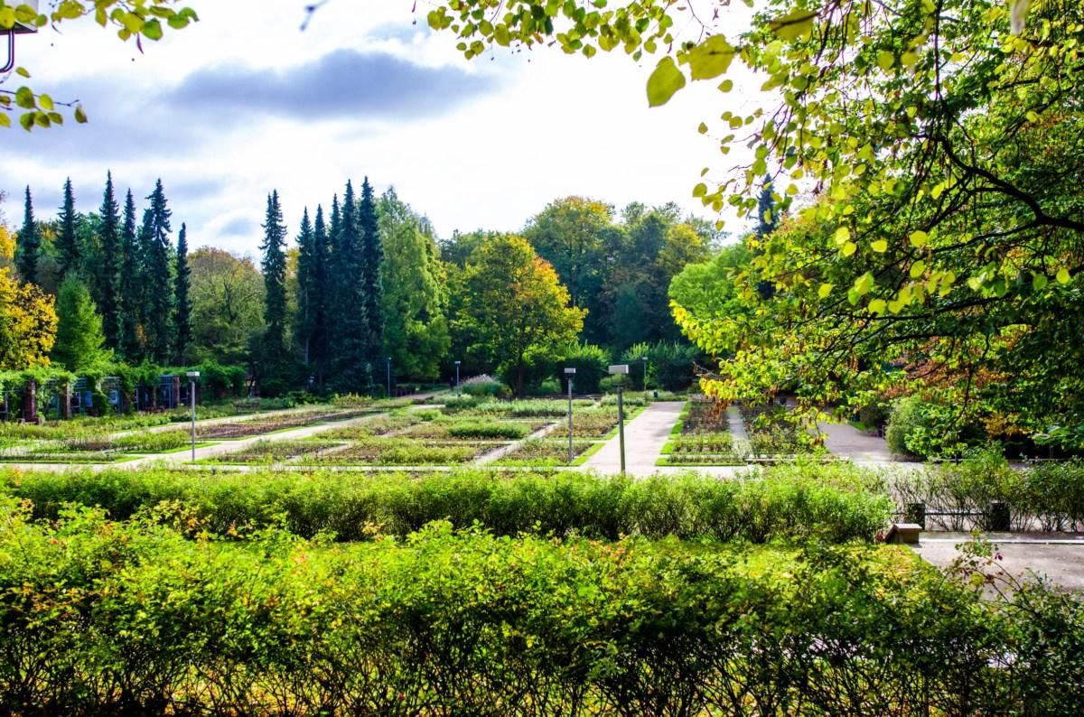 Ogród różany Różanka w Szczecinie zdjęcie 12
