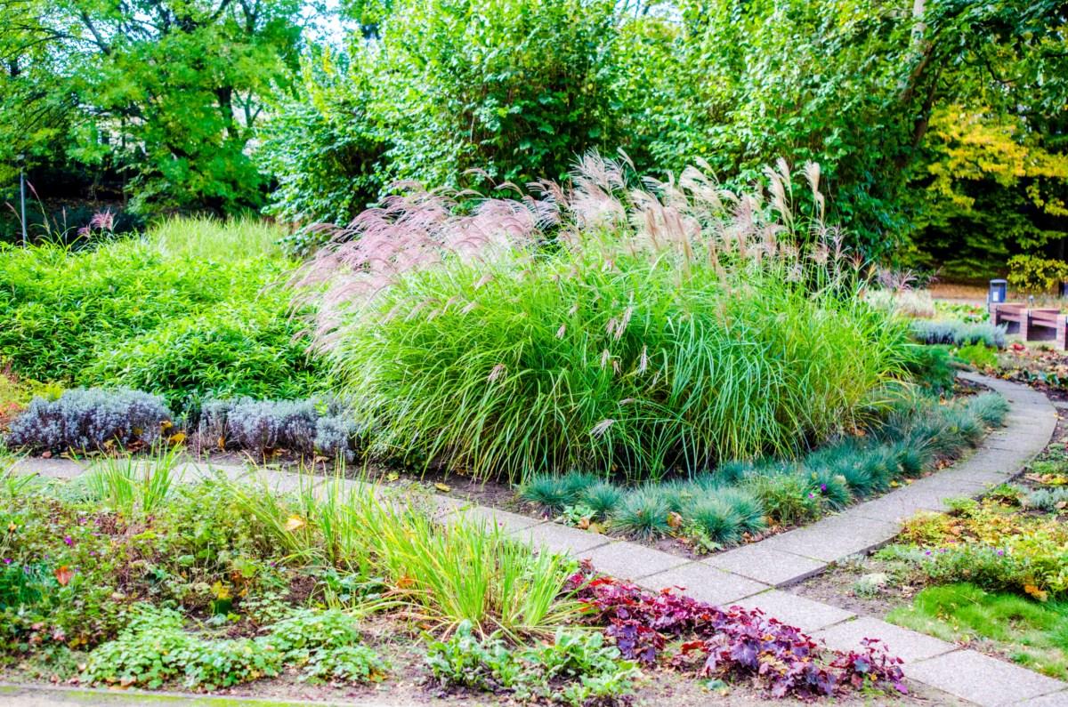 Ogród różany Różanka w Szczecinie zdjęcie 7