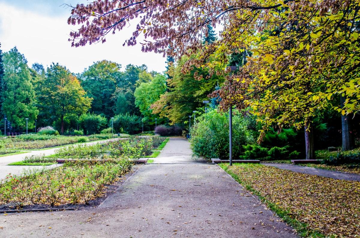 Ogród różany Różanka w Szczecinie zdjęcie 3