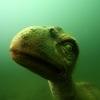 Podwodny Park Dinozaurów
