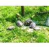 Mini zoo park miejski w Żywcu
