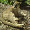 Ogród Zoologiczny w Opolu zdjęcie 3