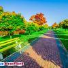 Park Sosnowiec Środula