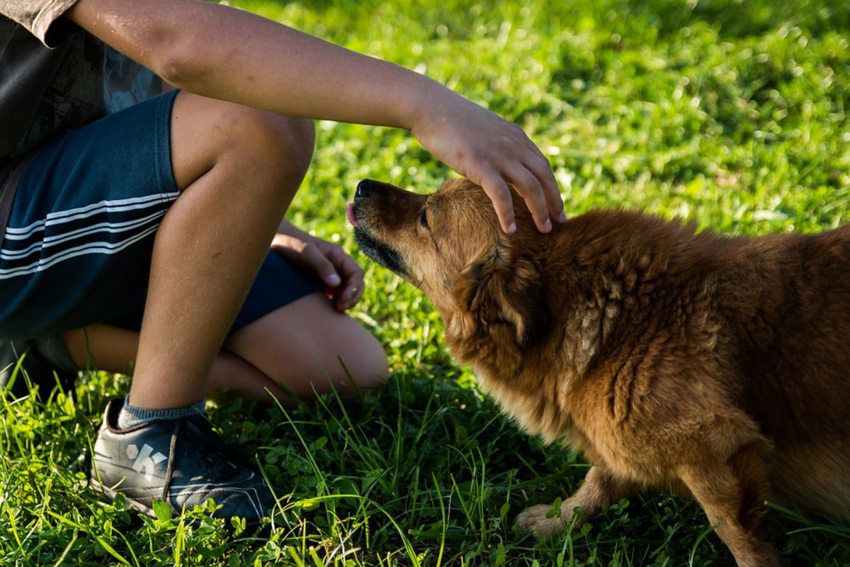 kontakt dzieci ze zwierzetami