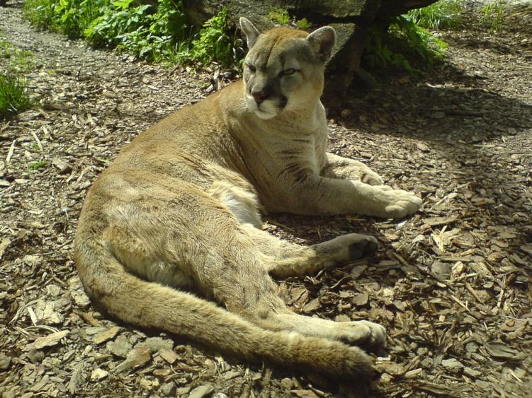 zoo w opolu ogród zoologiczny