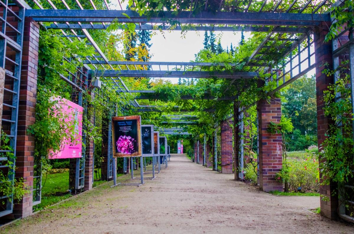 ogród różany Różanka w Szczecinie